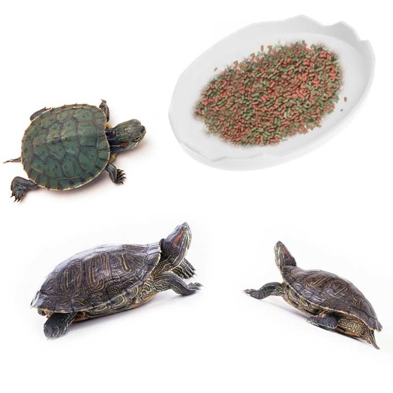 Best turtle food
